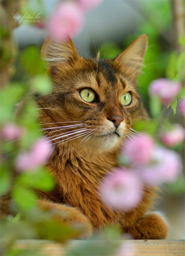 5504 best images about Soft Kitty on Pinterest | Orange