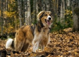 Here are some tips to keep your dog safe during the autumn months.