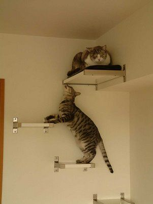 sylvia tipped me on this ikea bjarnum cat furniture by jujuo [via katt trappa]. simple and clean looking. the shelves can be cut to desired lengths to create your wall cat ladder. more cat furniture: > stairway to cat heaven > compact kitty box > cat bed > stolmen cat gym > the cat pod [&hellip