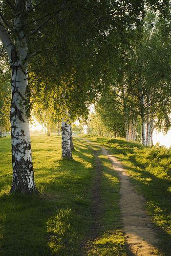 夏に行くならぜひ湖畔の森を散歩したい。フィンランド旅行のおすすめ観光アイデア。