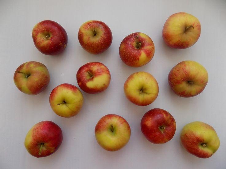 Paleo Apple Crisp | tanyapaulin.com