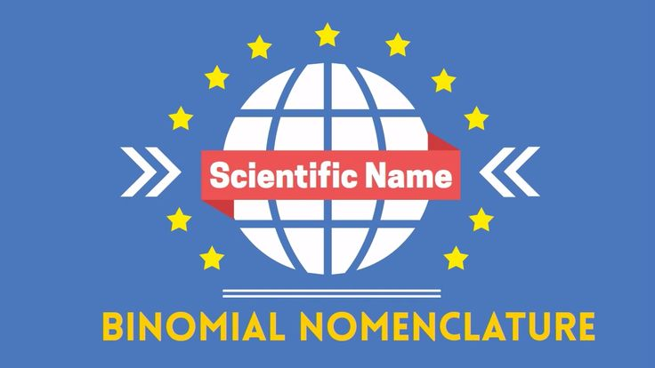 Scientific names. Let's look at the scientific name of several common organisms. Scientific name of a cat = Felis domesticus Scientific name human = Homo sap...