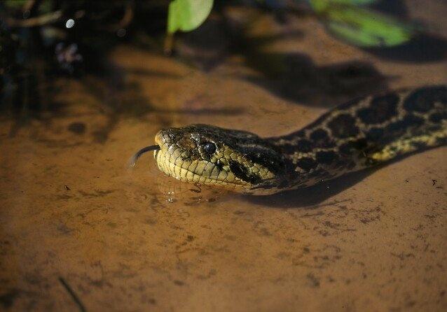 Snake 2D :)