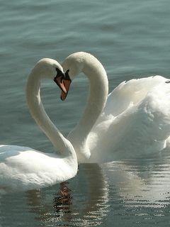 www.rsnasentrelinhas.blogspot.com Você é um pato ou um cisne? Post novo