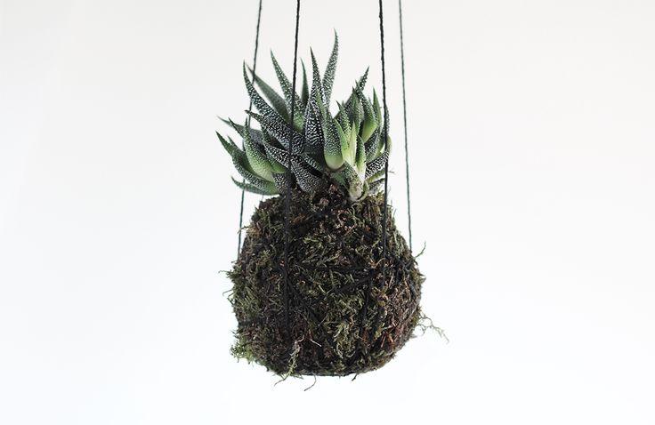 DIY: Kokedama hanging plant