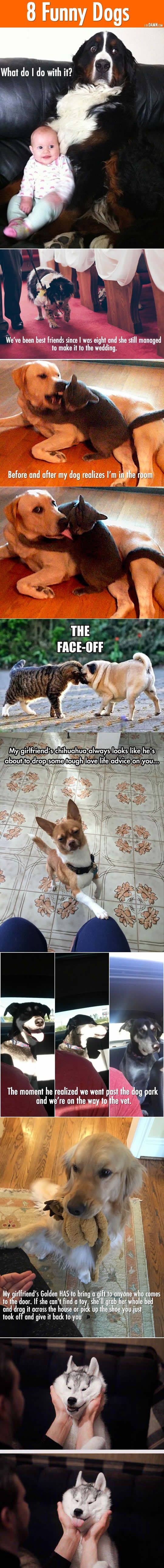 8 Funny dogs.  LOL, Damn! Funny and Awesome pictures.