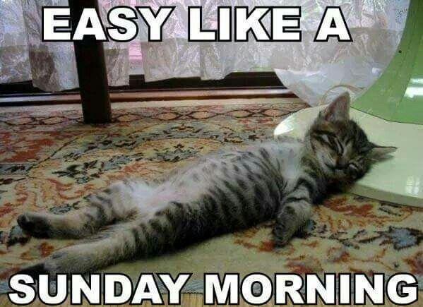 sunday morning kitty funny quotes pinterest sunday morning
