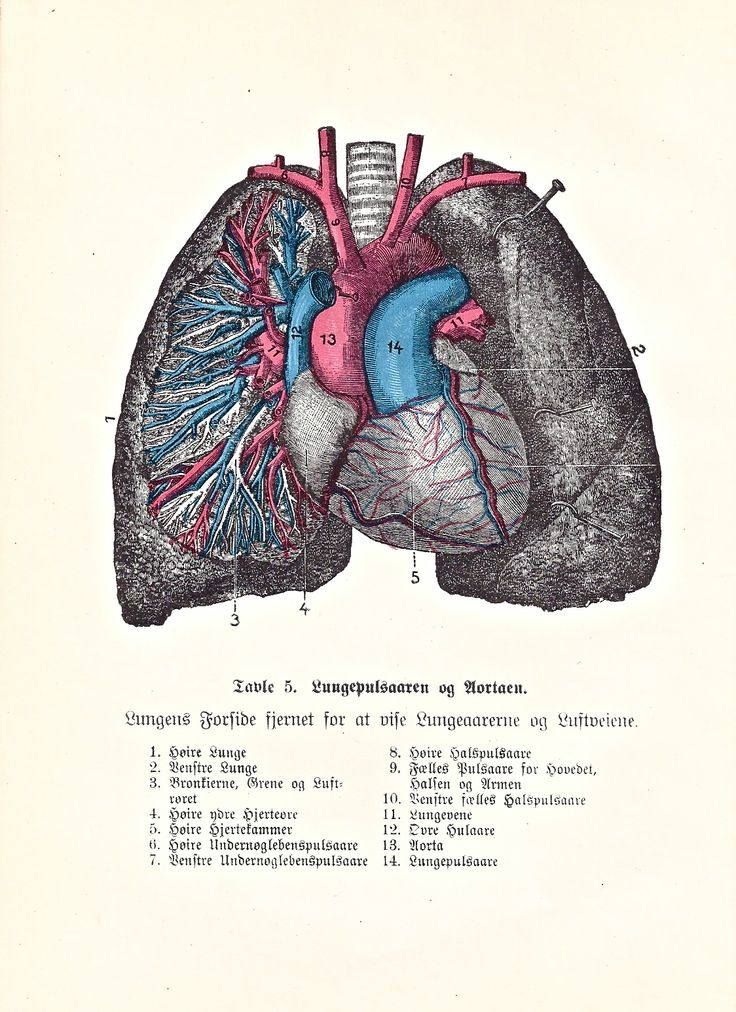 352 best Lungs and Chest images on Pinterest | Lunges, Lungs and Anatomy
