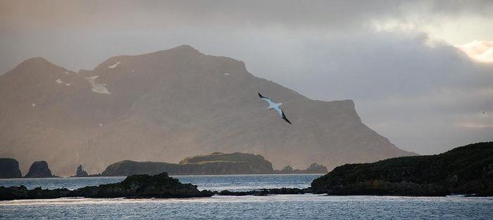 Islas Malvinas: una mirada diferente. Historia, flora y fauna
