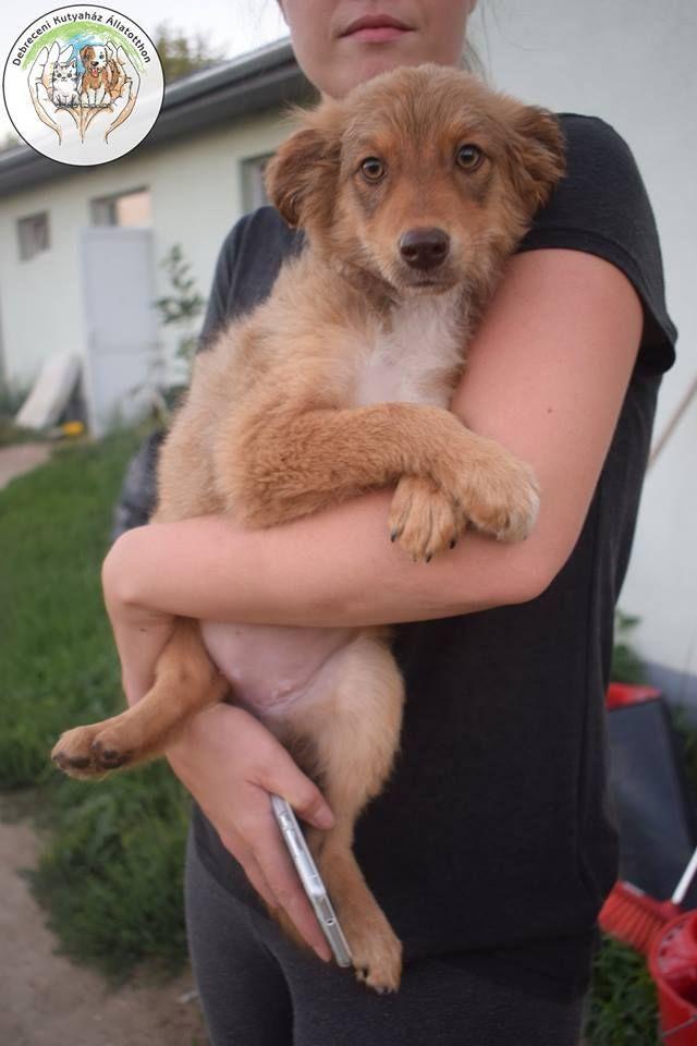 Örökbe fogadás!! - Szultán (kutya,német juhászkutya) blogja