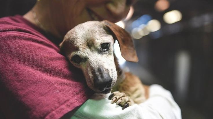 12++ Friends of the alameda animal shelter ideas in 2021