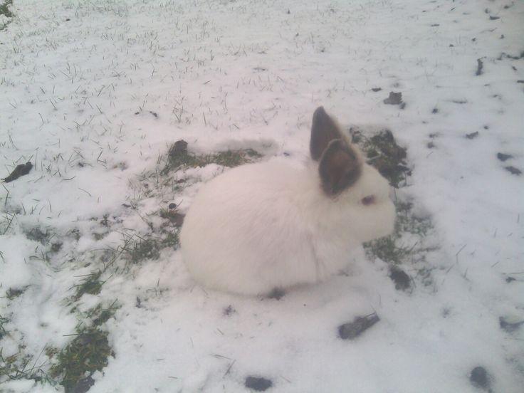 He is me bunny...