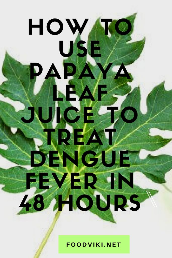 """Dengue fever"" is an extremely serious viral ailment caused by a specific mosquito type, which can have severe consequences. However, before you start panicking, we must tell you that there is a natural and affordable cure to dengue – the juice of papaya leaves! This juice makes the treatment of …"
