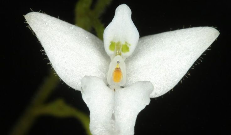 New checklist catalogs every vascular plant in the Americas