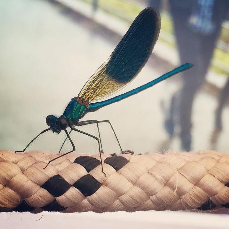 Rocco & patrick Salvadori   #iPhone #dragonfly #libellula #wings #beauty...