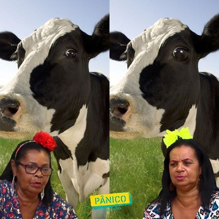 JOGO DOS 7 ERROS: conseguem encontrar a diferença na imagem depois da inseminação artificial que as Desempregagas fizeram na vaca?