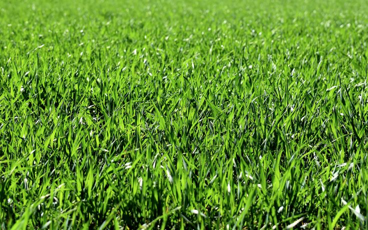 So when we came across the news that Danish researchers have concluded that grass is a good source of protein... we couldn't help but shake our heads. Well, of course, grass is a great source of protein! How else would bison, cows, horses, deer, and other grazing animals be able to build such large muscles?!