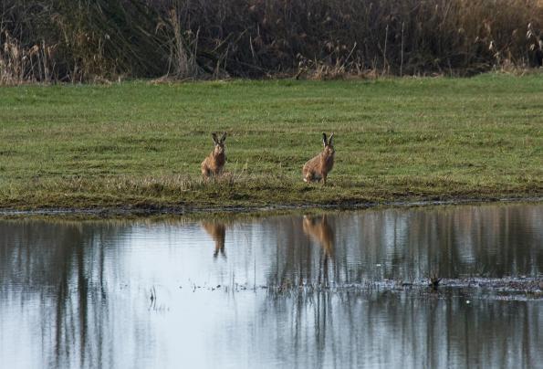 March Hares.. having fun