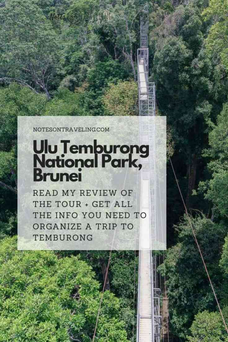 How To Do The Ulu Temburong National Park Tour, Incl. The Canopy Walk