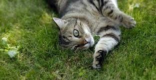 http://www.comparethebigcat.co.uk/insurancequotes/lifestyle/cheappetinsurancecomparison best pet insurance