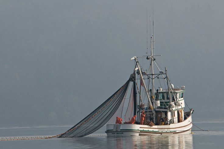 17 best images about ships on pinterest sea explorer for Purse seine fishing
