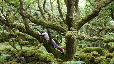 Embodied Presence Summer School Ty Canol Woods  2014