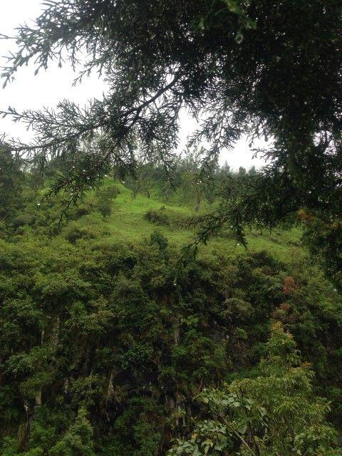 Hujan hutan hijau