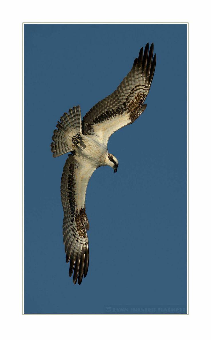 56 best Lynn Hackett Photography images on Pinterest | Midland texas ...