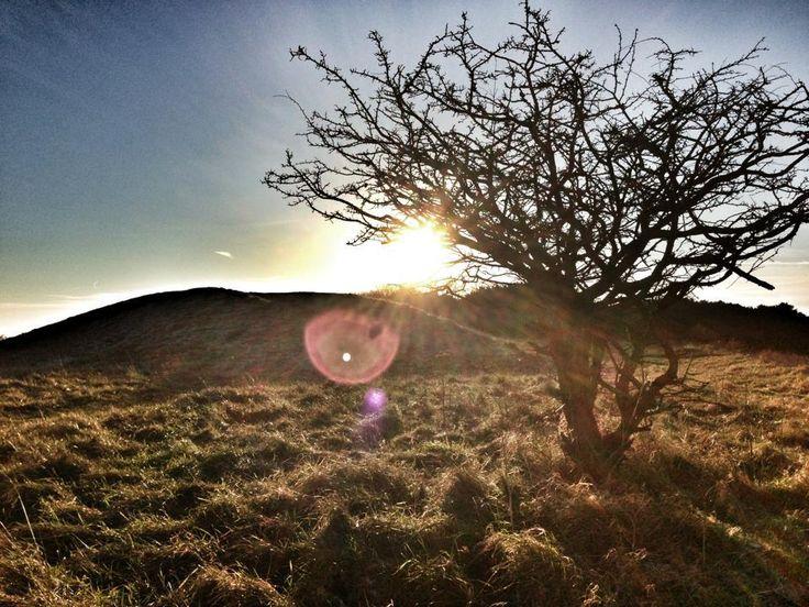 Devils Humps at Kingley vale sun set