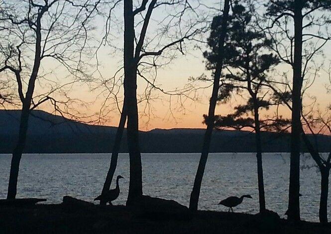 Lake dardanelle state park arkansas the natural for Lake dardanelle fishing