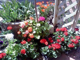 Kertek,Udvarok,Ötletek.: Virágok a saját udvaromon, kertemben   ERDÉLY FEL...