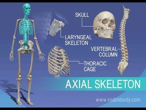 How to Learn the Human Bones | Tips to Memorize the Skeletal Bones - YouTube