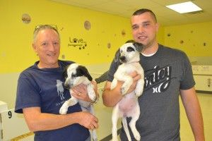 South Jersey Pet Adoption Center Parvo Outbreak