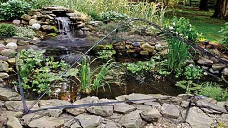 13 best predator control images on pinterest water for Koi pond hiding places