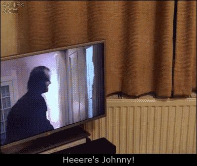 cat cats the shining peekaboo peek a boo here's johnny trending #GIF on #Giphy via #IFTTT http://gph.is/22h2LM7