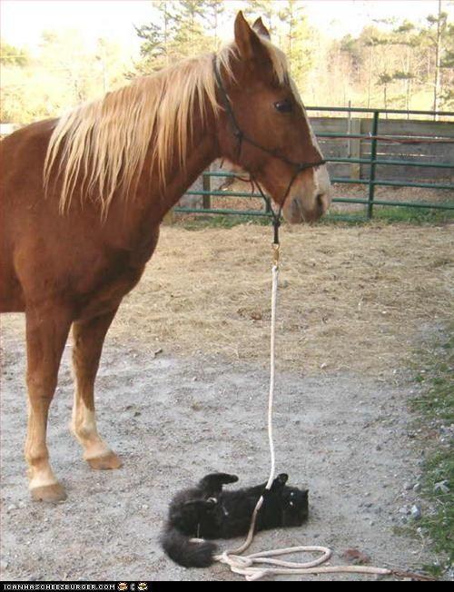 horse sheep monkey relationship