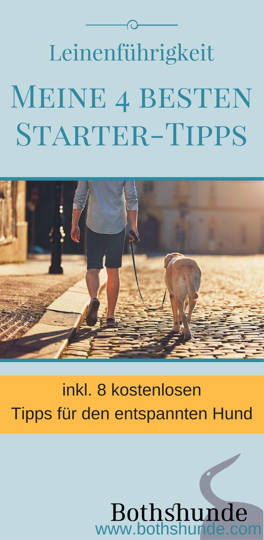 4 Tipps für das Training der Leinenführigkeit. So erklärst du deinem Hund wie das Gehen an lockerer Leine funktioniert.
