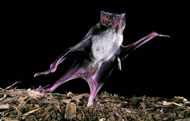 #Casos de morcegos com raiva cresceram 5 vezes em 2017; saiba como se proteger - Gazeta do Povo: Gazeta do Povo Casos de morcegos com raiva…