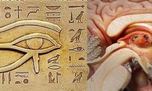 One Of The BIGGEST Secrets Kept From Humanity The Pineal Gland