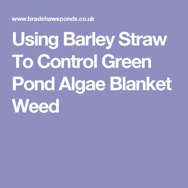 Best 25 Pond Algae Ideas On Pinterest