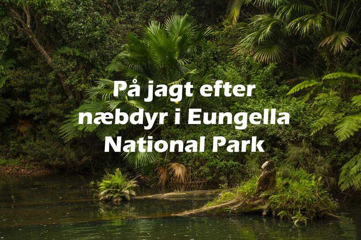 Vil du gerne se vilde næbdyr, så er Eungella National Park i Queensland det bedste sted, at tage hen! Læs om mine oplevelser og tips til parken