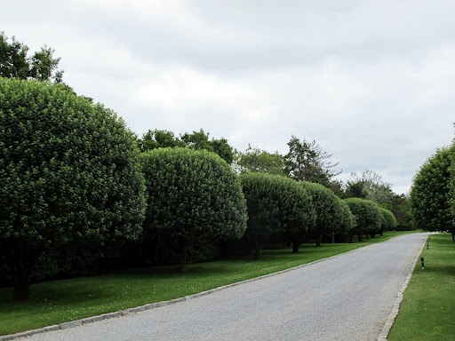 Very shapely trees.: Shapely Trees, Chelsea 150, Neatly Clipped, Clipped Hedging