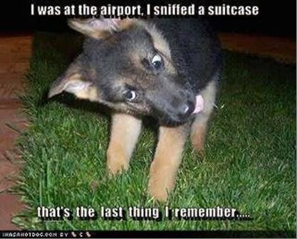 Police Pup German Shepherd Images Pinterest Funny Dogs Funny