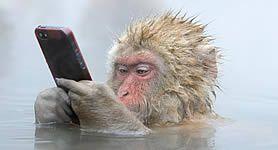 2014 legszebb vadvilági fotói