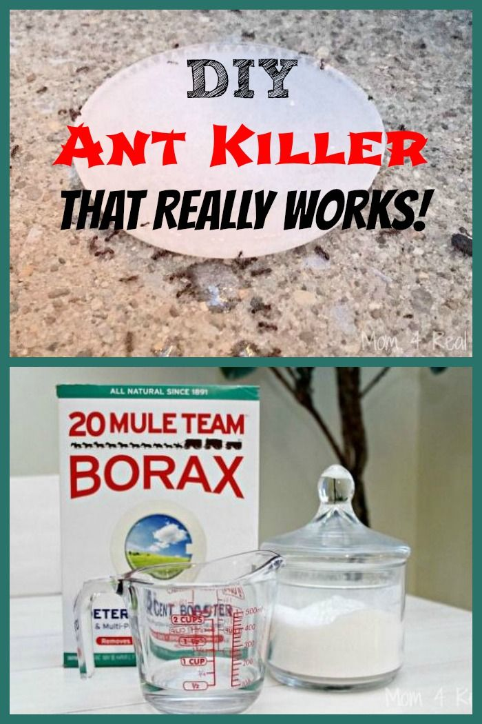 diy ant killer that really works ants diy and crafts and ant killers. Black Bedroom Furniture Sets. Home Design Ideas