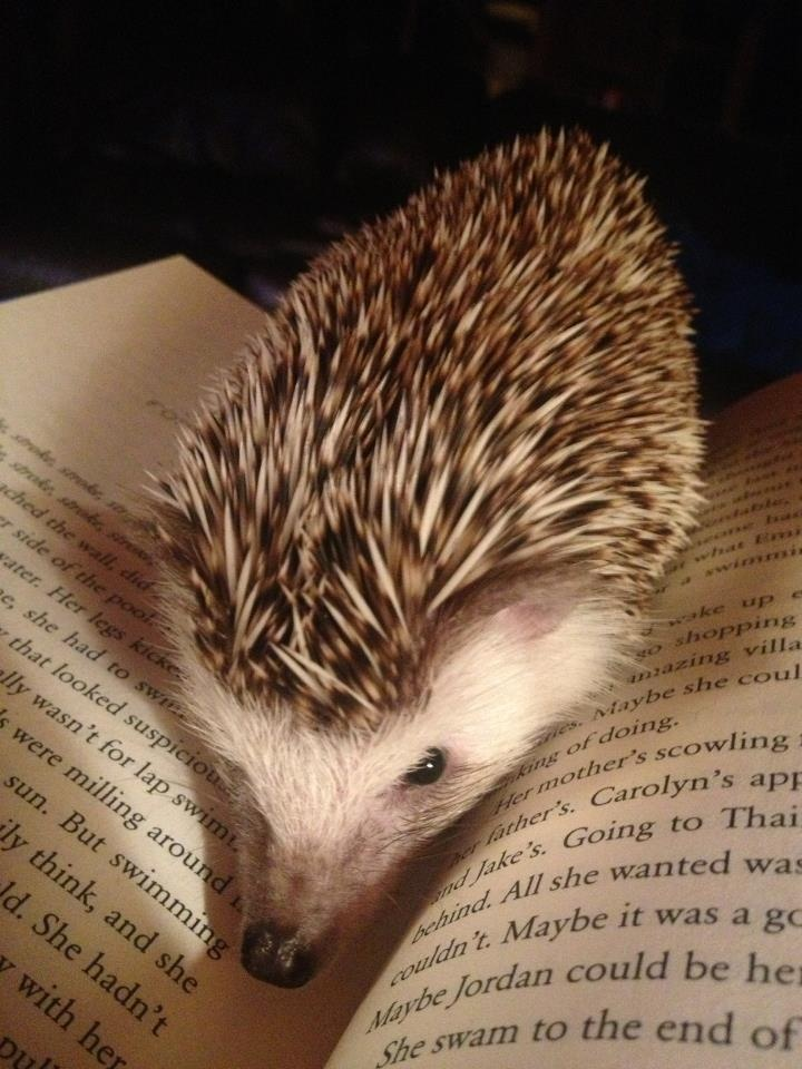 Words and a hedgie. ^_^