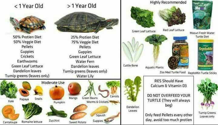 Recommended food for yellow belly turtles xx