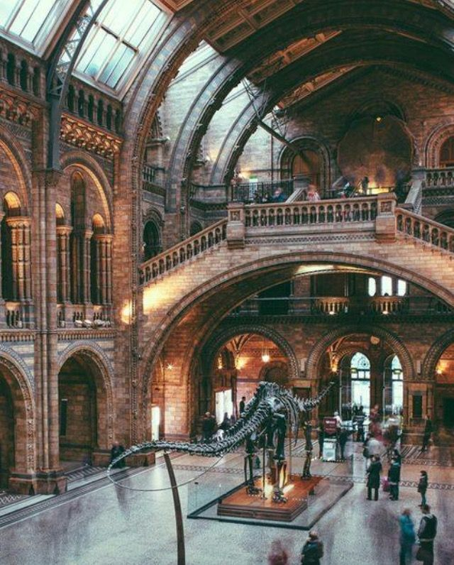 National history museum, London ✔️