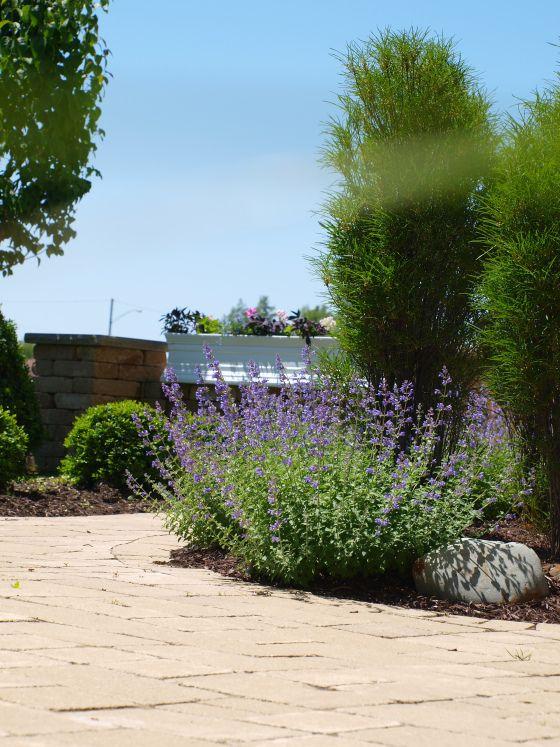 best 25 low maintenance shrubs ideas on pinterest low. Black Bedroom Furniture Sets. Home Design Ideas
