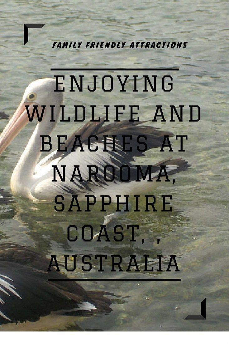 Attractions at Narooma, Sapphire Coast, Australia